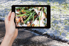 Man taking picture of first snow at lawn Stock Photos