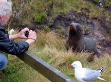 A Seal - model... Stock Photos