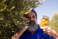 Man talking on mobile phone while examining pickled olive. In farm Royalty Free Stock Image