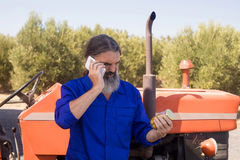 Man talking on mobile phone while examining pickled olive. In farm Royalty Free Stock Photography