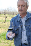 Man tasting red wine. Man tasting a glass of red wine in a vineyard Stock Photography