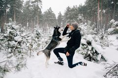 Man teaching commands his Husky dog. Training dog. Man teaching commands his Husky dog in winter snowy forest Royalty Free Stock Photography