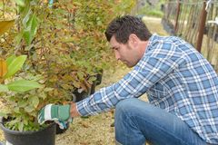 Man tending potted plants. Potted Royalty Free Stock Photos