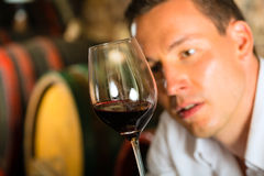 Man testing wine in background barrels. Man testing wine in background wine barrels in wine cellar Stock Images