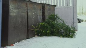 A man throws a Christmas tree into the bin. Winter vacation concept, slow motion stock footage