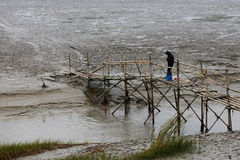 A man in the tidal flat river bridge on fishing. After the ebb, a man fishing on bamboo bridge, in the rainy day Stock Photography