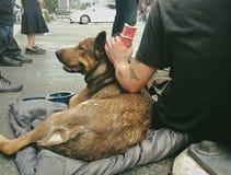 Man tiggaren med hunden på den upptagna genomskärningen i i stadens centrum Toronto Arkivfoton