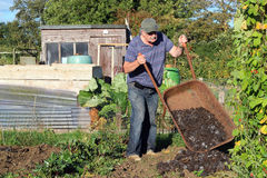 Man tipping manure from a wheelbarrow. A man tipping a wheelbarrow full of muck or manure onto his garden. The manure will enrich the soil for vegetables to be Royalty Free Stock Photography