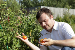 Man with tomatoes Royalty Free Stock Images