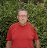 Man with Tomatoes Vertical royalty free stock image