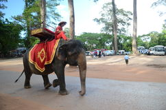 Man on top of an  elephant in Cambodia Stock Images