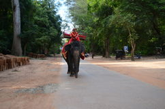 Man on top of an  elephant in Cambodia Royalty Free Stock Images