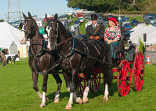 Man in top hat driving horse and carriage. Man driving horse and carriage at Westmorland County Agricultural show stock image