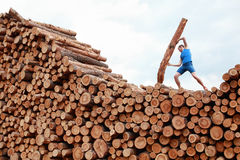 Man on top of large pile of logs lifting heavy log - training Stock Image