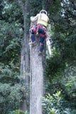 Man Topping Tree stock photo