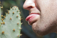 Man touching cactus Stock Photo