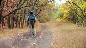 Man tourist in a blue jacket with a backpack hikes in the autumn forest.  stock video footage