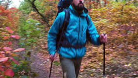 Man tourist in a blue jacket with a backpack hikes in the autumn forest stock footage