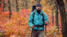 Man tourist in a blue jacket with a backpack hikes in the autumn forest.  stock footage