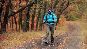 Man tourist in a blue jacket with a backpack hikes in the autumn forest stock video footage