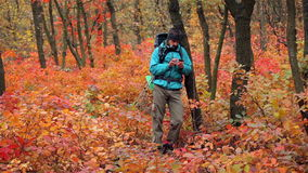 Man tourist in a blue jacket with a backpack uses smartphone in the forest stock video footage
