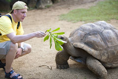 Man the tourist feeds a turtle Royalty Free Stock Photography