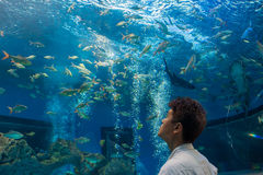 Man or tourist is looking at fishes in freshwater aquarium Stock Photography