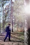 A man is a tourist in a pine forest with a backpack. A hiking tr. Ip through the forest. Pine reserve for tourist walks. A young man in a hike in the spring. r Royalty Free Stock Photography