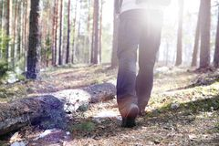A man is a tourist in a pine forest with a backpack. A hiking tr. Ip through the forest. Pine reserve for tourist walks. A young man in a hike in the spring.r Royalty Free Stock Images