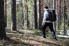 A man is a tourist in a pine forest with a backpack. A hiking tr. Ip through the forest. Pine reserve for tourist walks. A young man in a hike in the spring. r Stock Image
