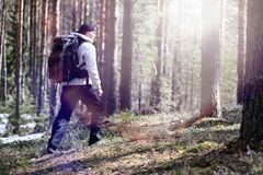 A man is a tourist in a pine forest with a backpack. A hiking tr. Ip through the forest. Pine reserve for tourist walks. A young man in a hike in the spring.r Stock Images