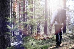 A man is a tourist in a pine forest with a backpack. A hiking tr. Ip through the forest. Pine reserve for tourist walks. A young man in a hike in the spring.r Stock Photos