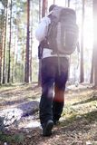 A man is a tourist in a pine forest with a backpack. A hiking tr. Ip through the forest. Pine reserve for tourist walks. A young man in a hike in the spring.r Stock Image