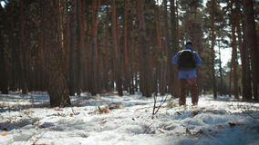 A man is a tourist in a pine forest with a backpack. A young traveler in a hike in the winter. Winter sport activity. Man hiking in the forest stock video footage