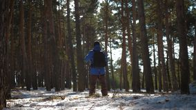 A man is a tourist in a pine forest with a backpack. A young traveler in a hike in the winter. Winter sport activity. Man hiking in the forest stock footage