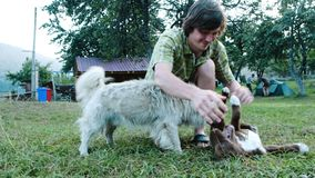Man tourist playing with dogs in a campsite. Man tourist playing with puppy dogs in a camping stock video