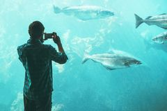 Man tourist taking photo by smartphone of big aquarium fish Stock Images