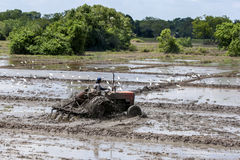 A man on a tractor ploughing rice fields north of Anuradhapura in Sri Lanka. The fields will then be planted with rice Stock Photo