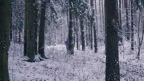 Man trail runner running in winter forest. Inspiration and motivation concept outdoors. Cross country running person on snow in forest. Sport and fitness in stock footage
