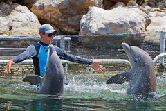 Man training dolphins in water park. PUERTO AVENTURAS, MEXICO - JULY 14: Unidentified man training dolphins in water park situated at the harbor Stock Photos