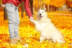Man training his dog in beautiful   park Royalty Free Stock Images