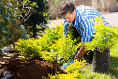 Man transplanting new plant Stock Photos