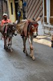 Man transports goods on mules in narrow streets Lahore Pakistan. Lahore, Pakistan - September 9, 2012: A man leads two mules with packs on their backs up the wet royalty free stock photo
