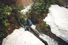 Man Traveler with backpack crossing waterfall and snow glacier Royalty Free Stock Photo