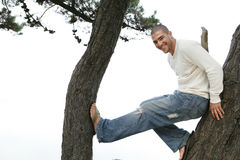 Man in tree Stock Images