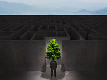 Man with tree in front of a huge maze,eco concept Stock Image