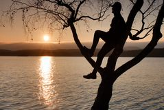 Man on tree. Silhouette of  lone man sit on branch of birch tree at sunset at shoreline. Stock Photo