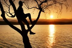 Man on tree. Silhouette of  lone man sit on branch of birch tree at sunset at shoreline. Man on tree. Silhouette of  lone man sit on branch of birch tree  in Stock Photos