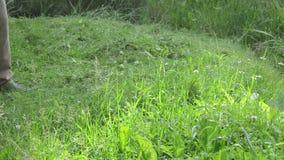 Man trimmer cut grass. Closeup of meadow grass and garden worker man with trimmer cutter cut it stock video