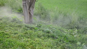 Man trimmer cut grass. Turn view man gardener with trimmer mow cut weeds grass in garden after rain. Water vapour drops rise up stock footage